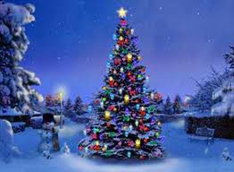 my favorite choice for a christmas tree is a balsam fir which is the tree i remember my family always decorating when i was a boy - Outside Christmas Tree