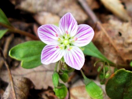 Native NH Plants | New Hampshire Garden Solutions