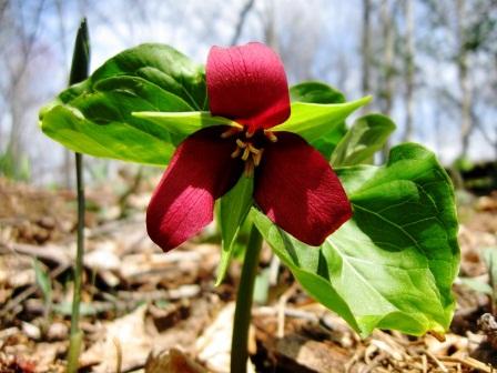 Cómo forzar los árboles y los arbustos florecientes de la primavera