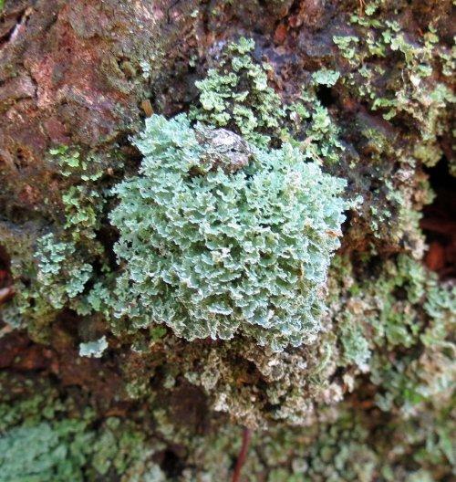 11. Unknown Lichen