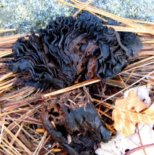 13. Dead Mushroom Gills