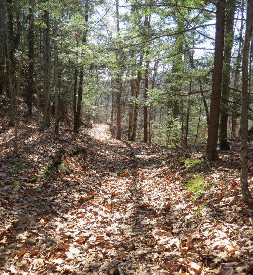 2. Bear's Den Trail