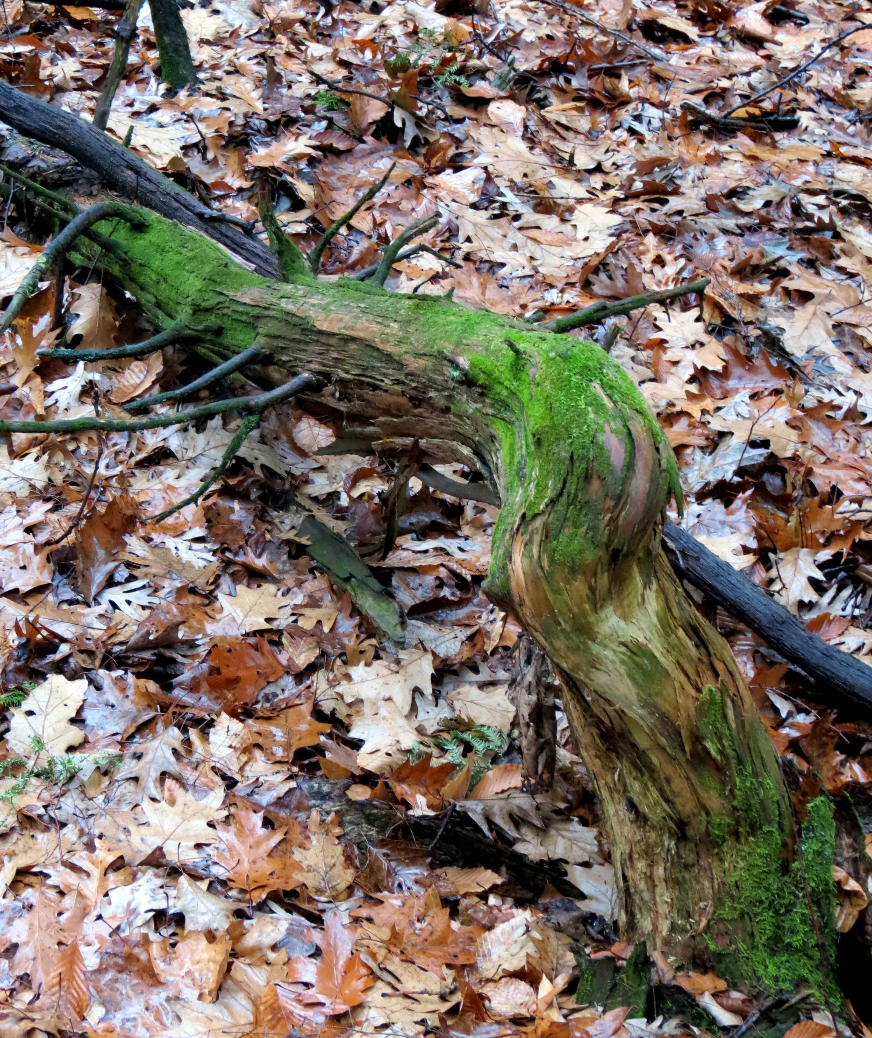 2. Fallen Tree