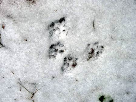 3. Squirrel Tracks