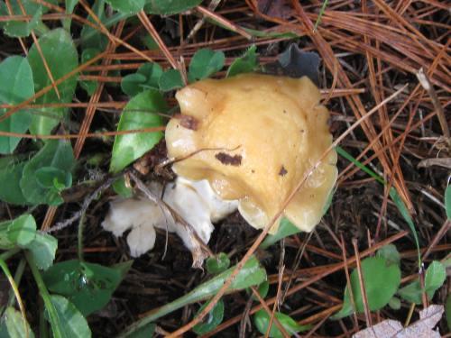 4. December 3rd Mushroom