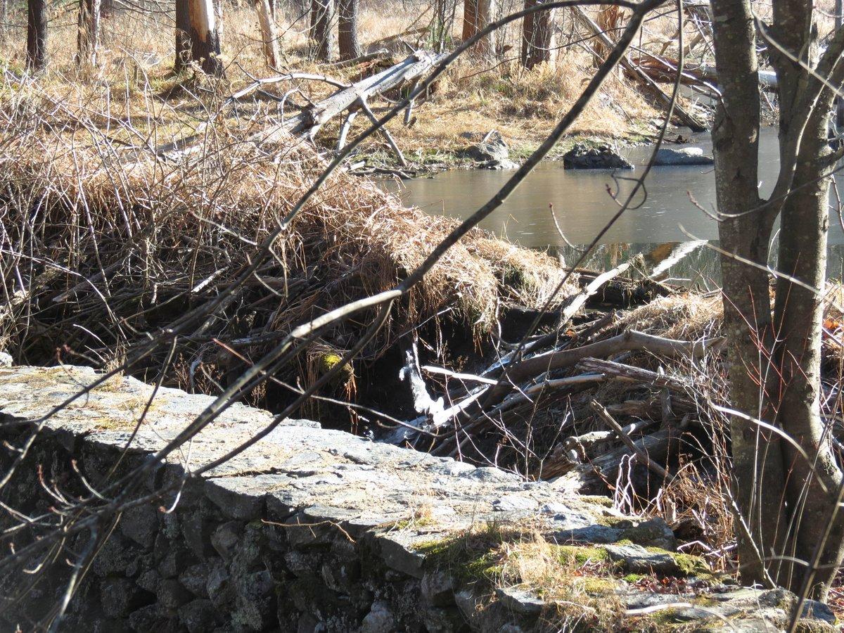 5. Beaver Dam Behing Stone Wall