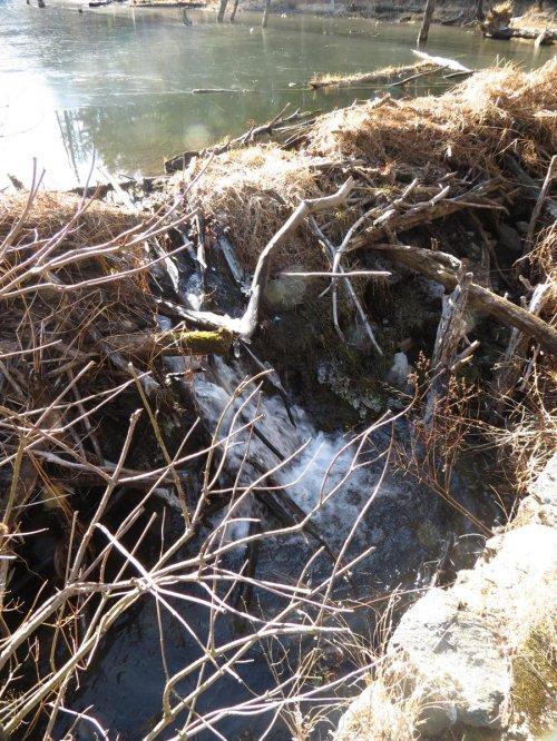6. Beaver Dam Breech