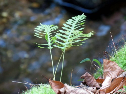 6. Fern on Stream Bank