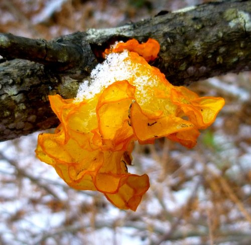 6. Orange Witch's Butter 2