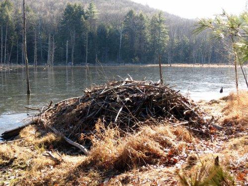 7. Beaver Lodge