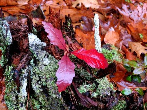 9. Oak Tree Growing on a Stump