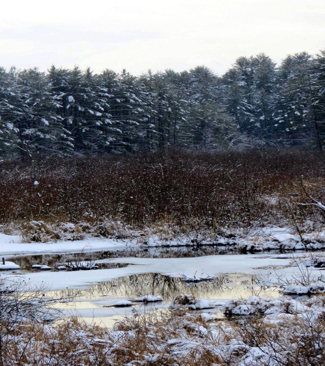 1. Bog in January