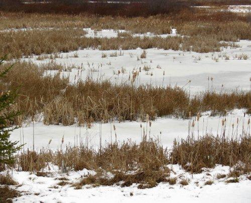 1. Wetland