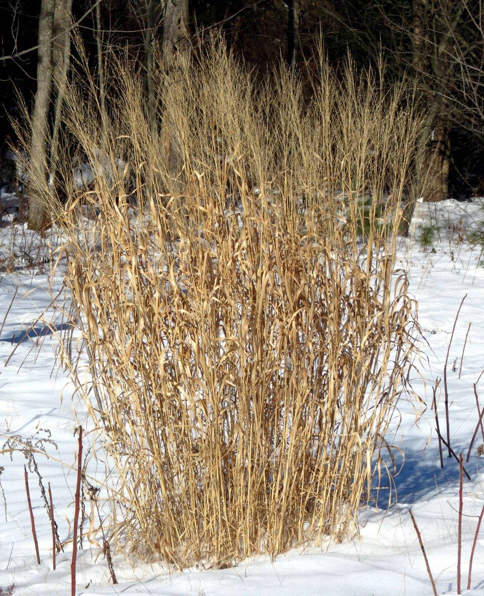 10. Tall Grass