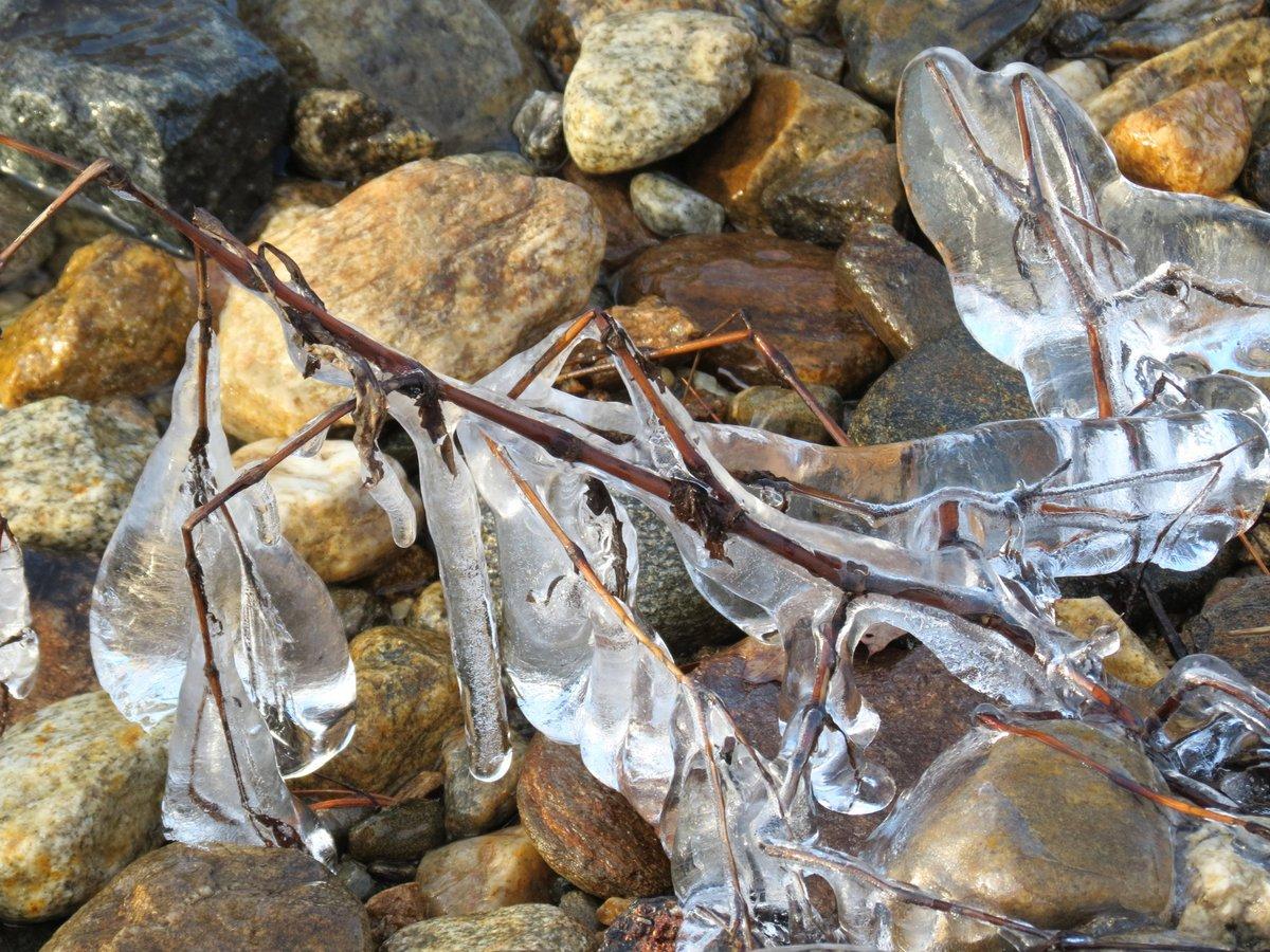 2. Ice Covered Shrub