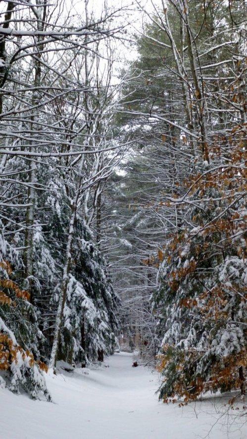 2. Snowy Path