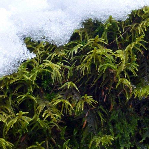 4. Winter Moss