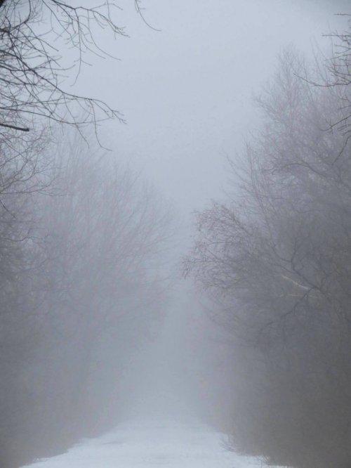 5. Foggy Trail
