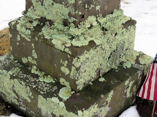 5. Lichens on Headstone