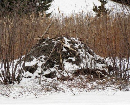 6. Beaver Lodge