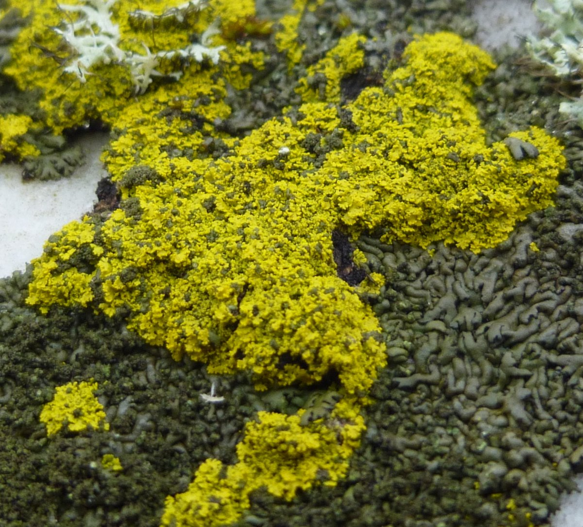 6. Green and Yellow Lichens
