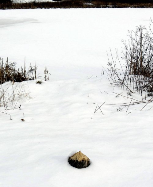 7. Beaver Stump