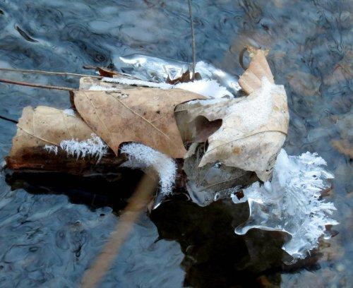 8. Frosty Leaves in Stream
