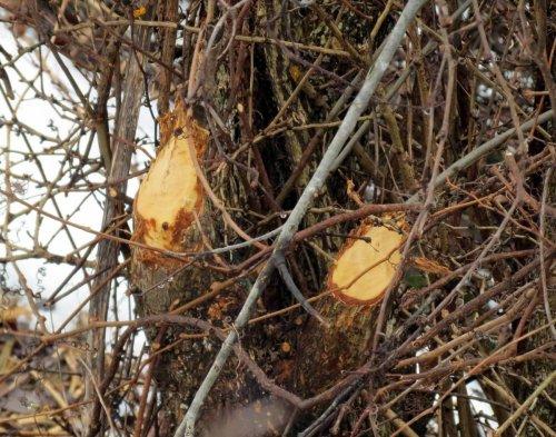 9. Beaver Stumps