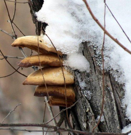 9. Snowy Fungi