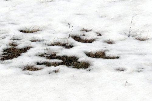 1. Snow Melt