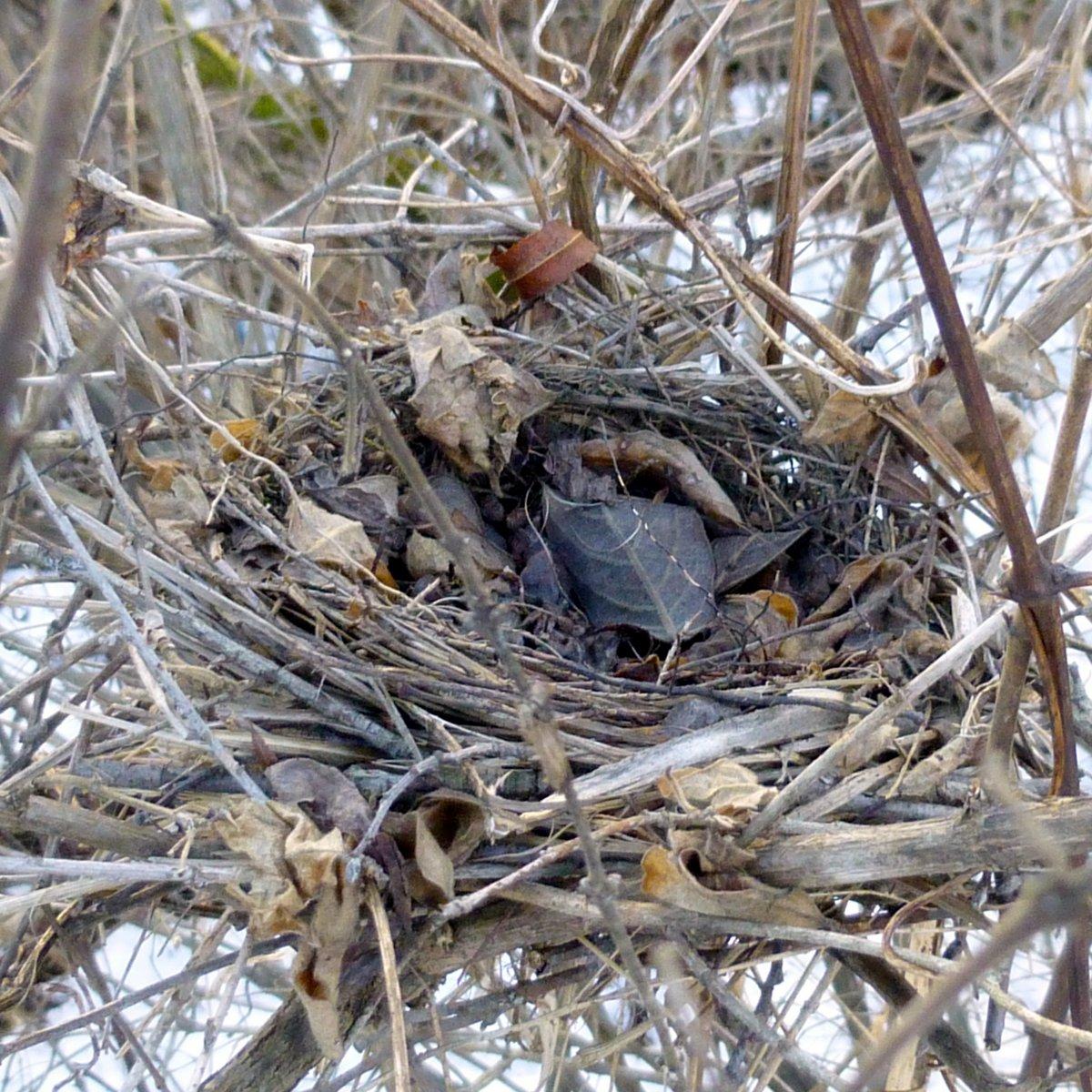 10. Bird's Nest