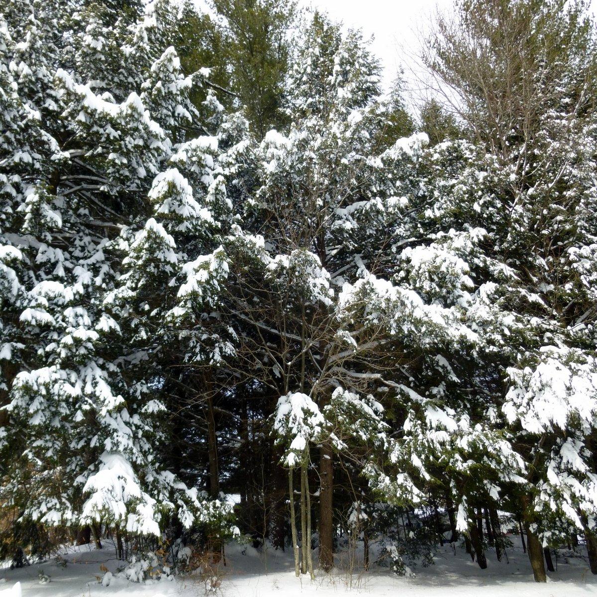 2. 2-9-13 Snowstorm