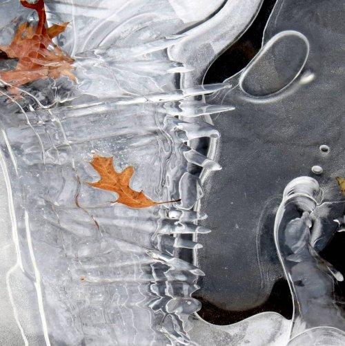 6. White Ice