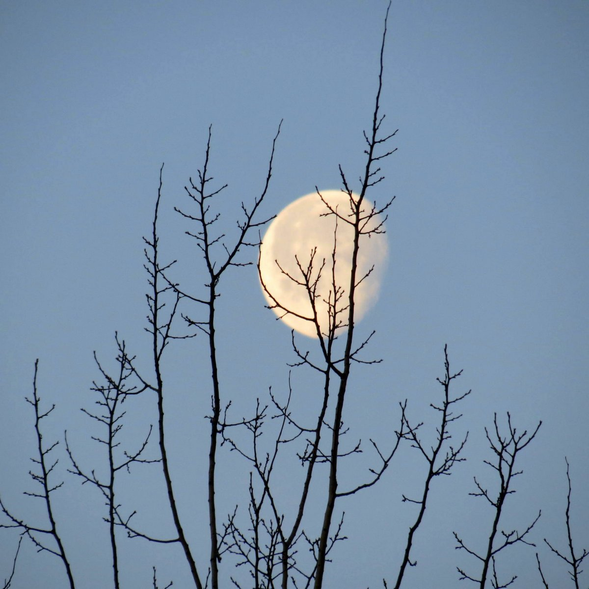 1. Moon on March First