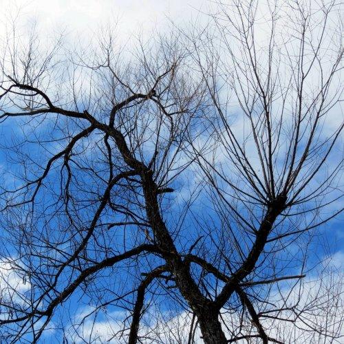 1. Red Winged Blackbird Tree