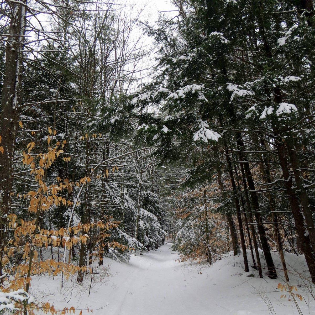 1. Snowy Trail Friday 3-8-13