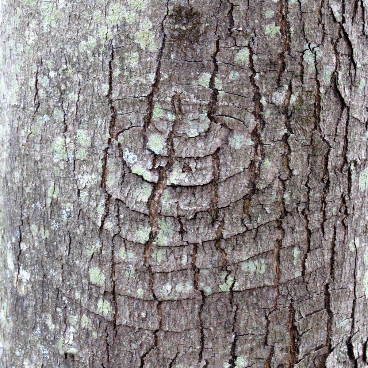 10. Pattern in Red Maple Tree Bark