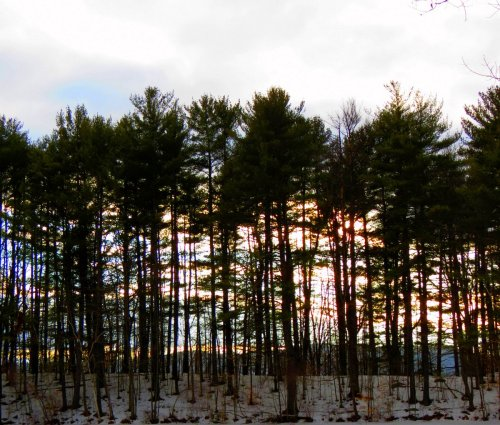 11. Sunset Through Pines