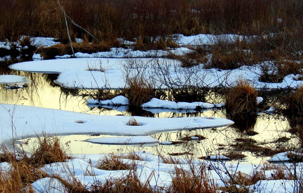 13. Marsh at Sunset