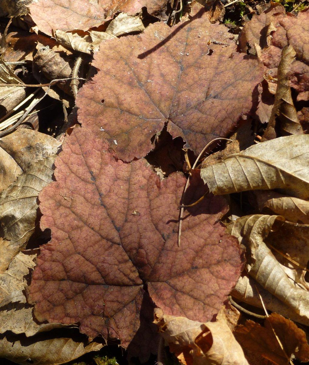 4. Foam Flower Leaves