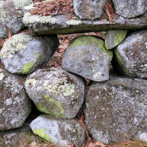 7. Common Goldspec Lichen on Stone Wall