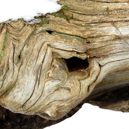 7. Log