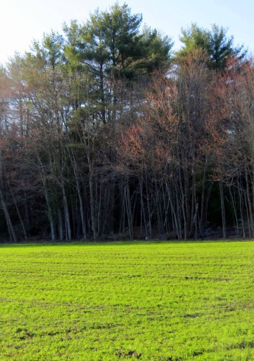 2. Green Field