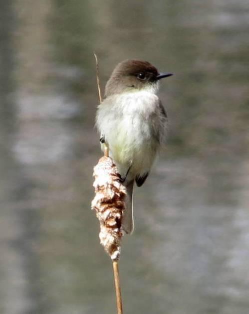 4. Bird