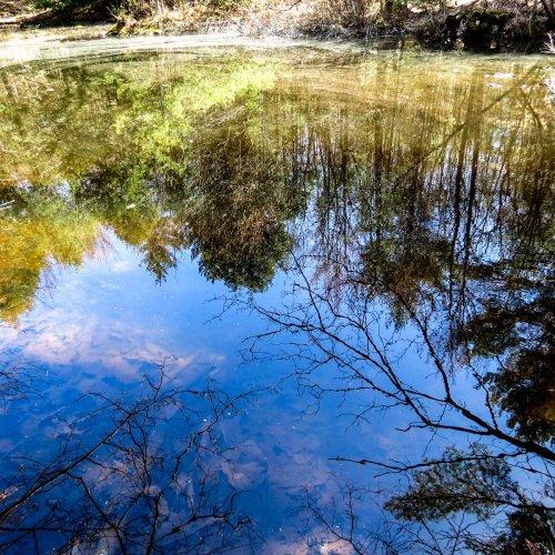 8. Vernal Pool Reflections