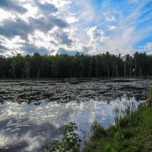 1. Beaver Pond