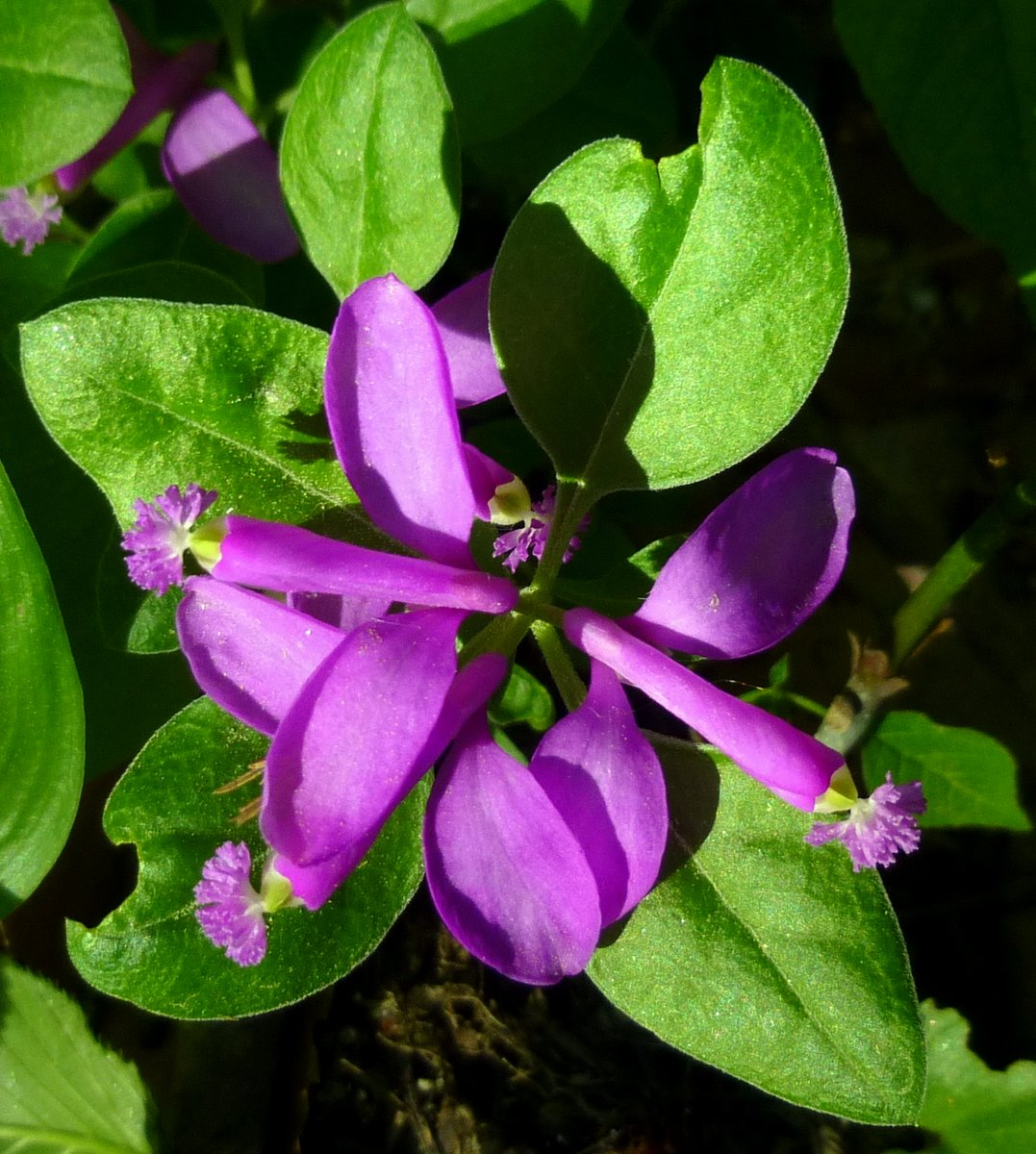 Herbal Academy The Virtues of Violets: Health Benefits of ...