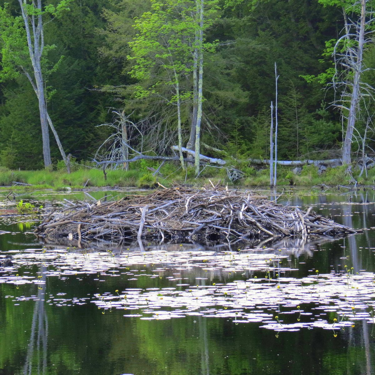 3. Beaver Lodge
