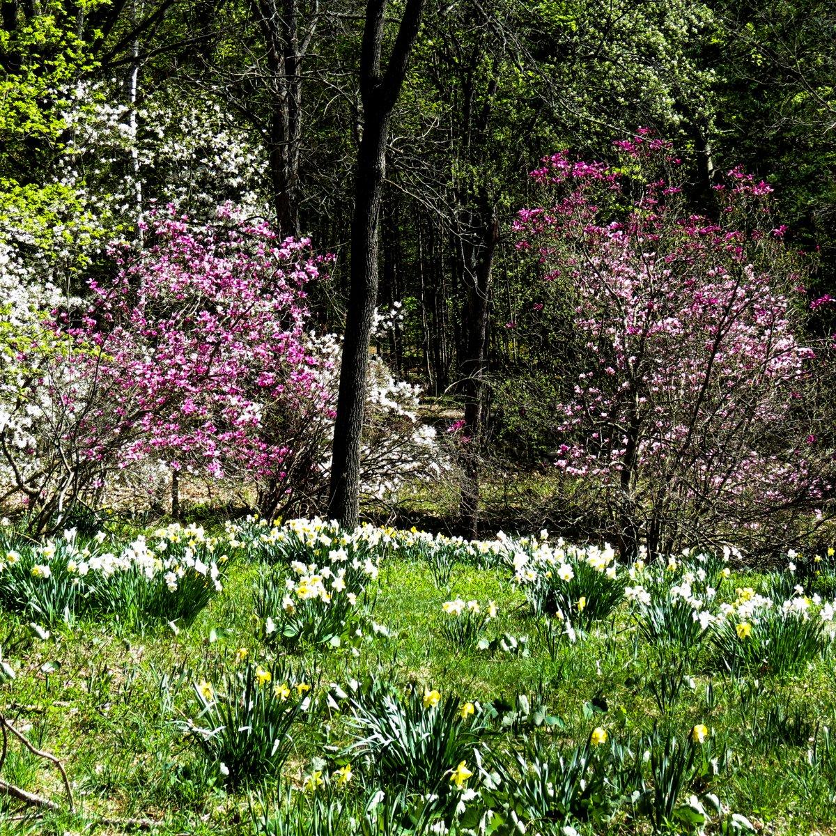 3. Woodland Garden