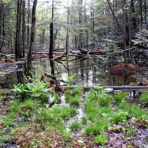 5. Beaver Pond